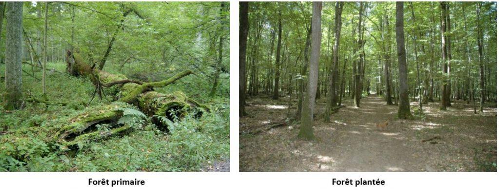 forêt vivante